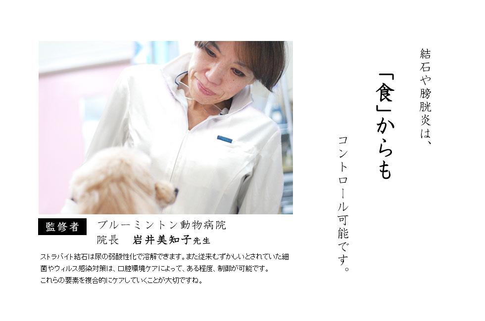 犬のストラバイト結石(ストルバイト結石)・膀胱結石・腎臓結石の愛犬には