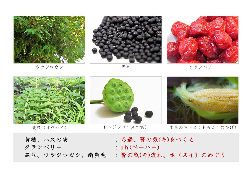 ウラジラガシ 黒豆 クランベリー 黄精(オウセイ)ハスの実 南蛮の毛(とうもろこしのひげ)