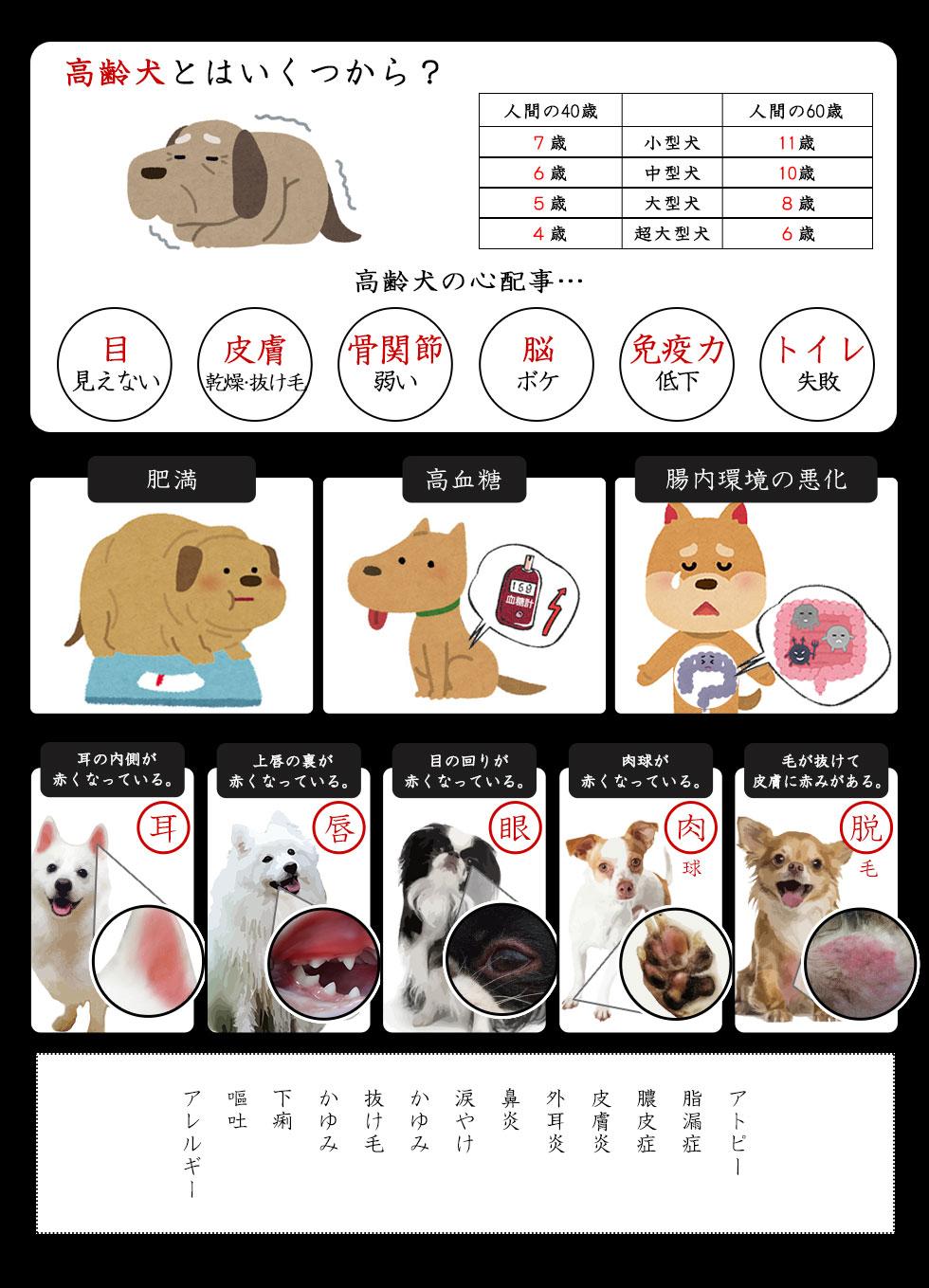 高齢犬 肥満 高血糖 腸内環境の悪化 耳の内側の赤い 上唇が赤い 目の周り赤い 肉球が赤い 毛が抜けて皮膚に赤み