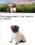 高脂血症犬.net