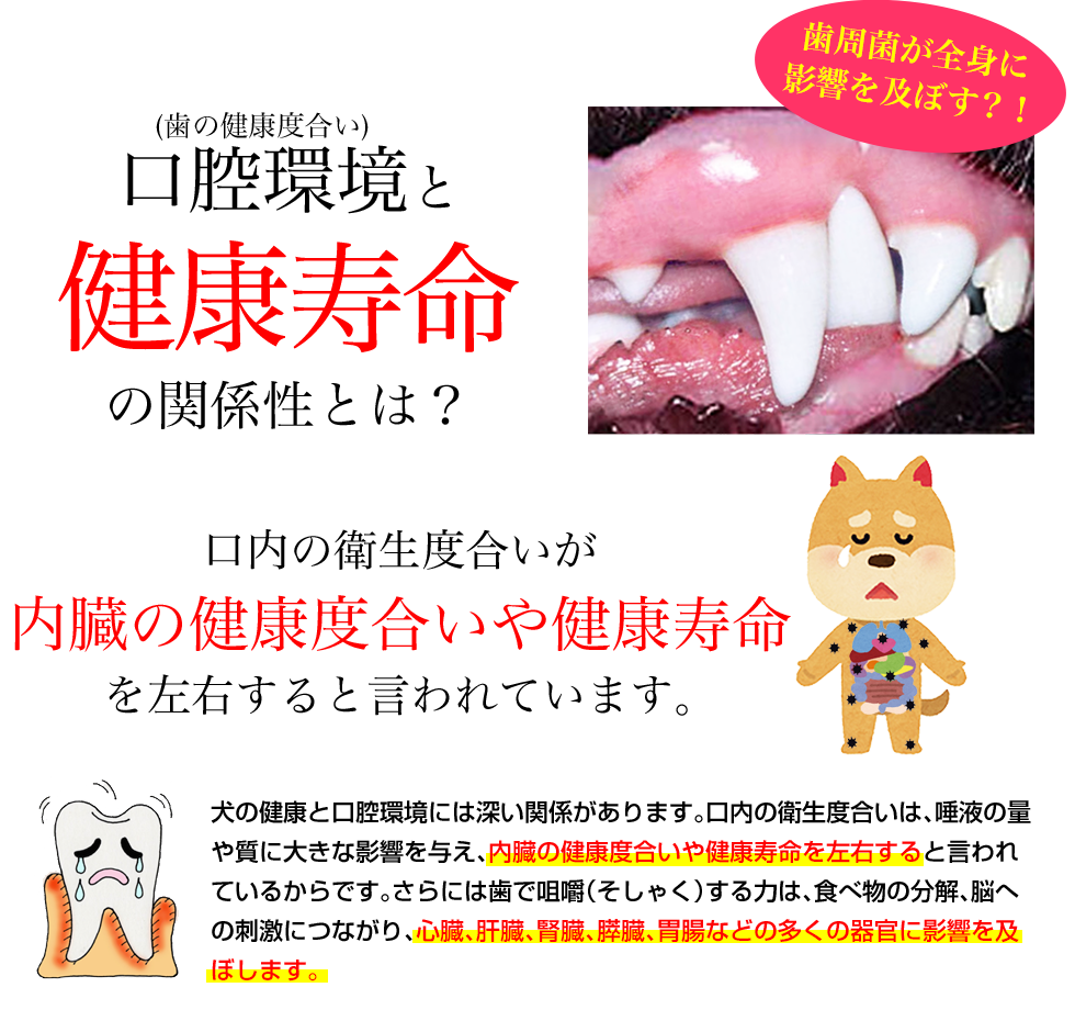 口腔環境と健康長寿の関係性